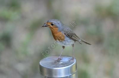bird7.jpg