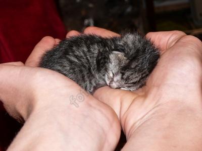 cat_hands.jpg
