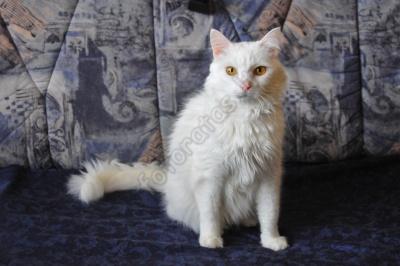 cat_white.jpg