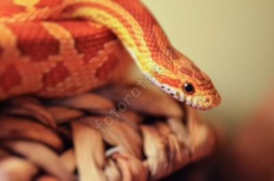 snake_maryte.jpg